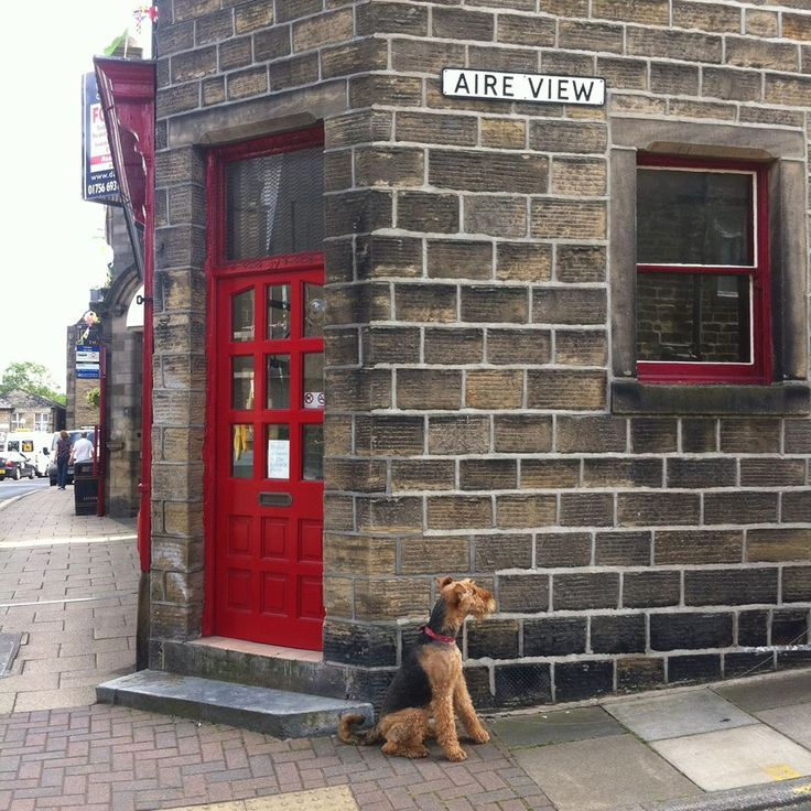 Aire Street with Airedale