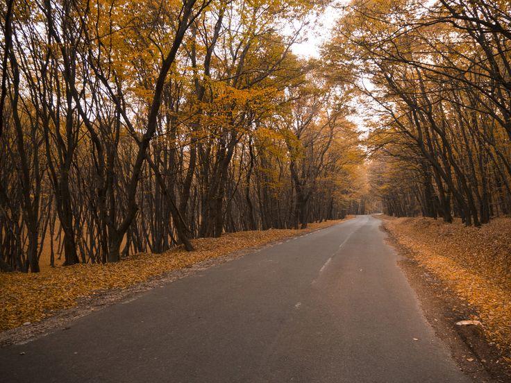 The latest from Sebastian Moise  #transylvania #romania #sighisoara #photography #autumnlandscape #medieval #sebastianmoise #autumn #dracula