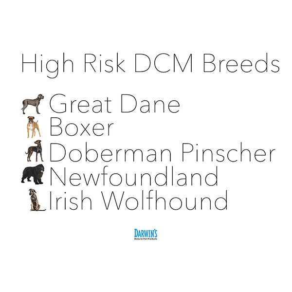 Everything You Need To Know About Dcm In Dogs Dog Health Pet Health Grain Free Diet