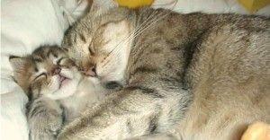 Katzenhaare kinderleicht von Möbeln und Betten entfernen
