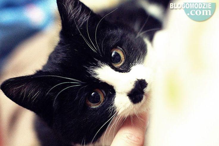 Cats look like hiter