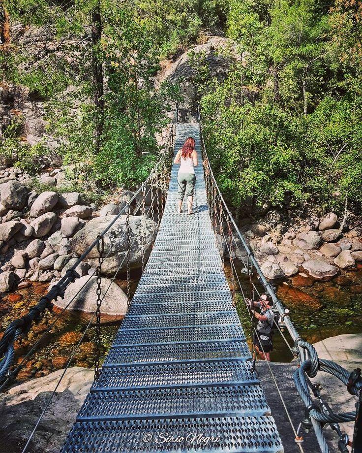 Ponte sospeso nella Foresta di Bonifato Corsica