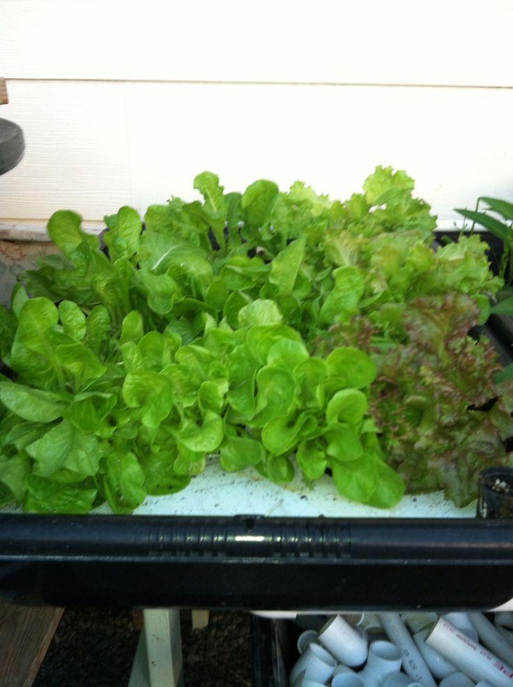 Great futur salad