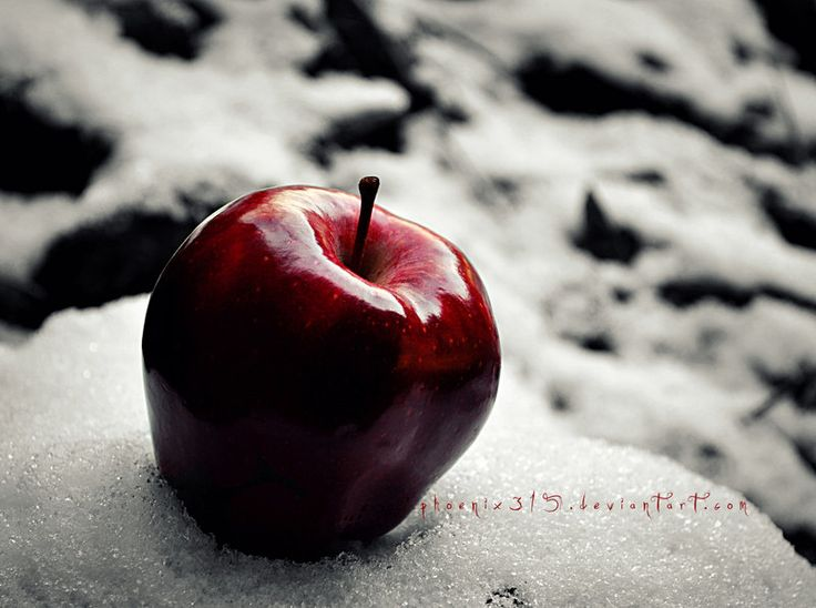 Red Apple in the White Snow by Phoenix315 Winter Is