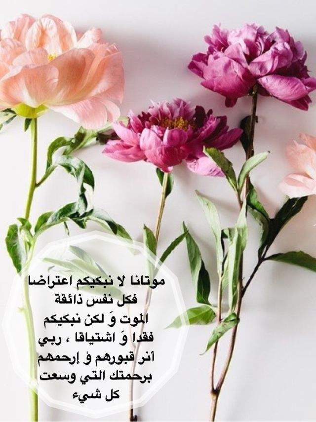 Pin By Sh Ahmad On راحلون عنا Plants Allah Photography