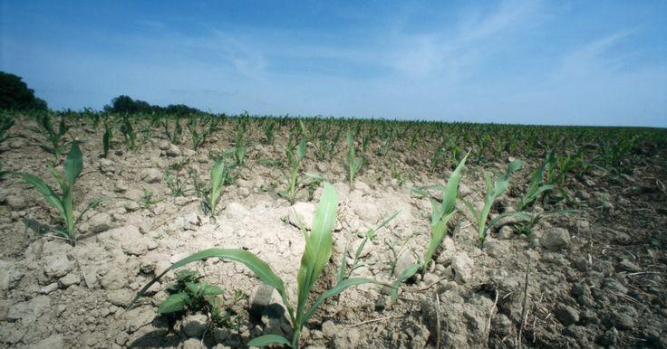 5 maneras de controlar la erosión del suelo. La erosión del suelo es un proceso de eliminación de tierra vegetal, a menudo resultado de inundaciones y el agotamiento de las tierras fértiles. Las causas de la erosión del suelo incluyen la lluvia, el viento y la remoción de vegetación. De acuerdo con la Universidad de Arizona, los metales y productos químicos vertidos en el suelo erosionado ...