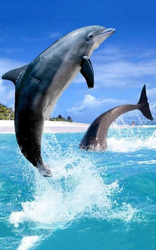 Dolphin HD Live Wallpaper ☆ is the most beautiful new app