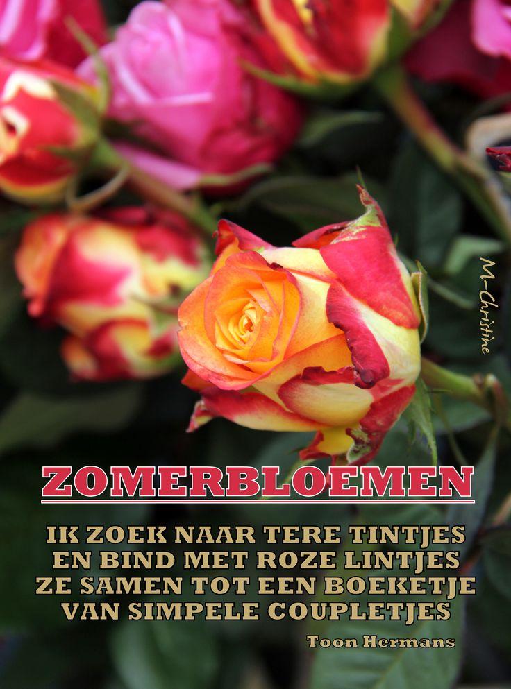 zomerbloemen - Toon Hermans