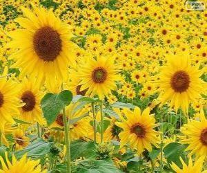 21 Best Puzzles De Flores Flowers Images On Pinterest