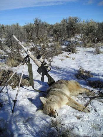 hunters in the snow essay tiger hunting more