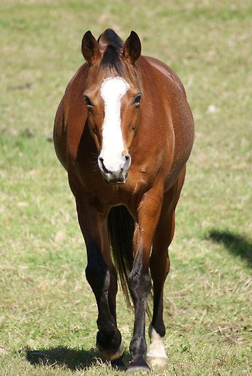Julies Horse #horse