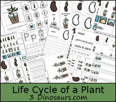 FREE Life Cycle of a Plant Pack for ages 2 to 8 -  over 55 pages - 3Dinosaurs.com: Kids Learning, Homeschool Gardens, Cycling Printable, Life Cycling Of A Plants, Lifecyclepl Packs, Gardens Theme, Plants Printable, Printable Packs, Glasses Houses