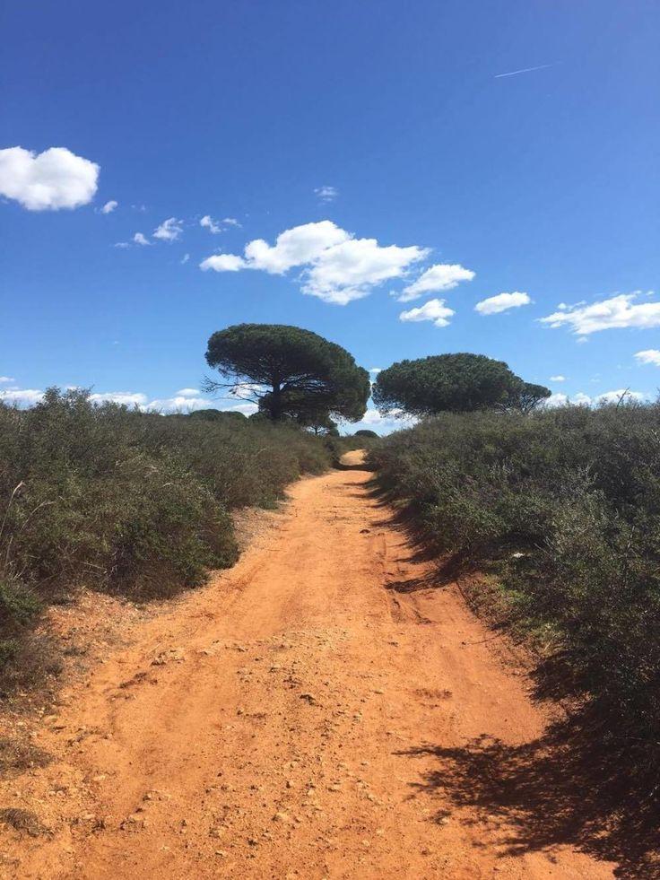 Fast wie eine Wüstenlandschaft: Der Rad- und Wanderweg in Conil de la Frontera, Andalusien, Spanien.