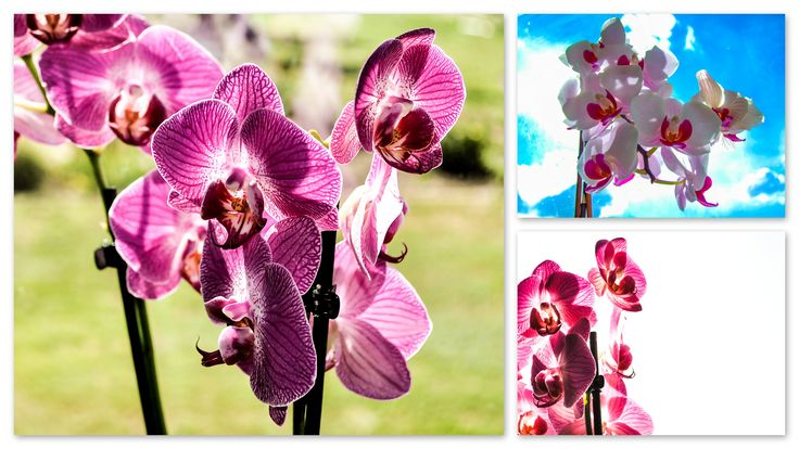 nature Photography | Orchid