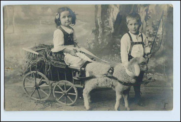 W5K62/ Kinder Handwagen Schaf Lamm Kutsche Foto AK 1908 | eBay