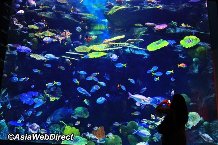 SEA LIFE Bangkok Ocean World - Siam Ocean World Bangkok
