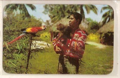 Miccosukee Roadside Attraction Monkey, Parot Postcard
