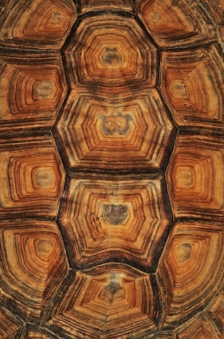 This is the inspiration for the patterns of shelf insert for the niche in the living room.  Tortoise Shell  #patterns and #textures