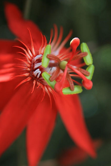 Passion flower | Sharon Mau