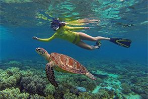 Great Barrier Reef Tour from Cape Tribulation