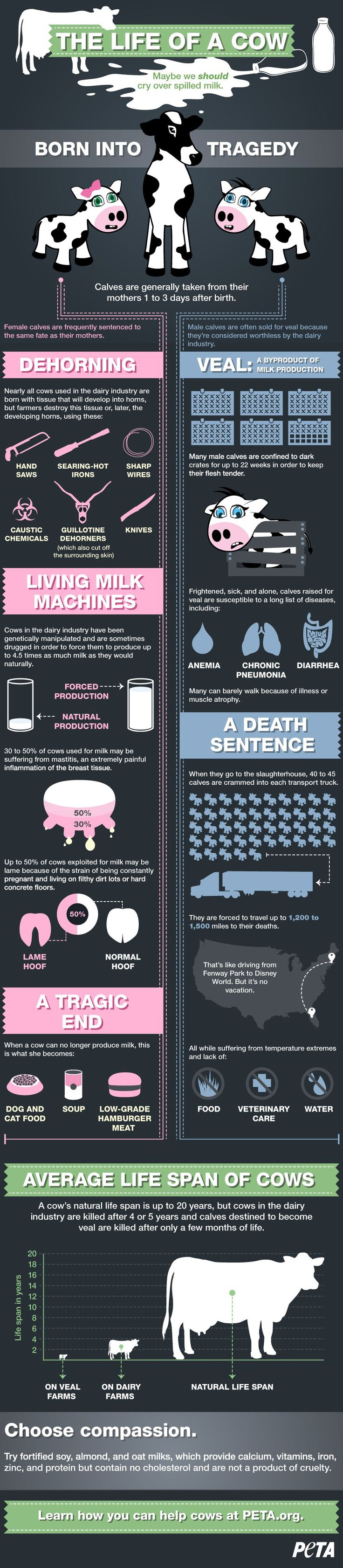 What secrets are dairy farmers keeping from you? Find out the cruelty cows endure on dairy farms in our infographic.