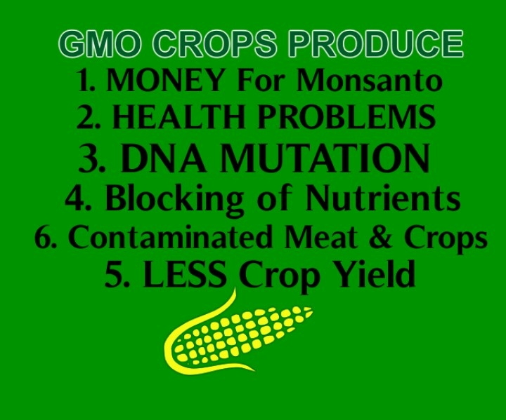 toxic tacos the case of genetically modified foods essay Here are 7 pros and cons of genetically modified organisms the pros & cons of genetically modified food july 9, 2013 but if this is the case.