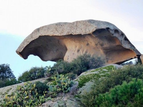 Arzachena's Mushroom - Sardinia (Italy) Looks like a tree. :)