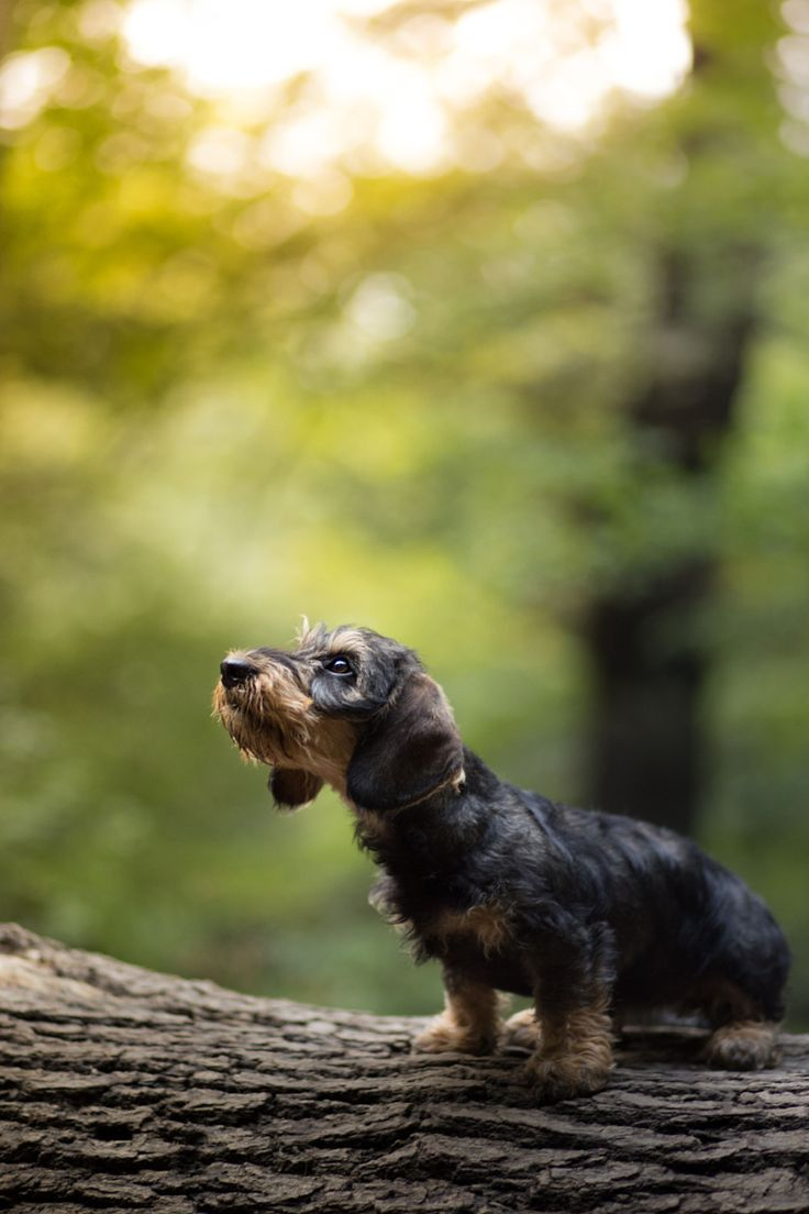 "handsomedogs: ""  looking up | Jasmin Leonard """