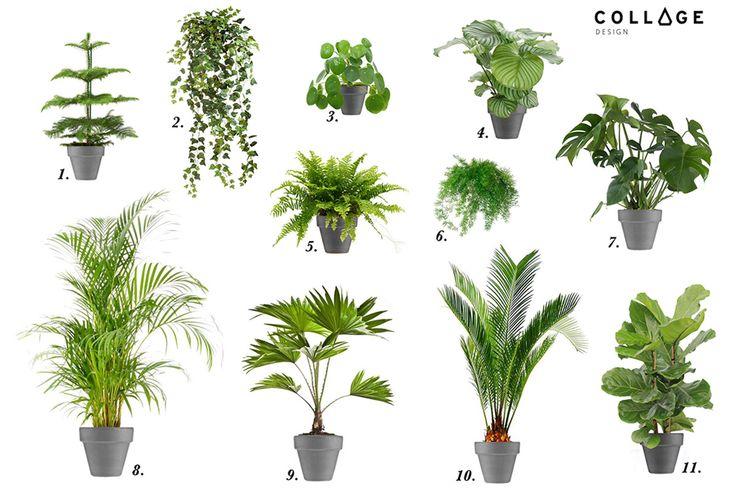 Moje Ulubione Rośliny Domowe www.collagedesign.pl