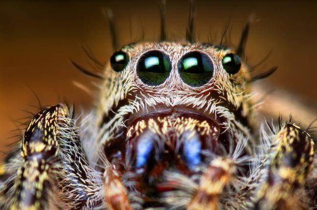 Человечество в опасности: всего за год пауки могут съесть всех жителей планеты https://joinfo.ua/inworld/1202187_Chelovechestvo-opasnosti-god-pauki-mogut-sest.html {{AutoHashTags}}