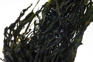 Alga Wakame per preparare i bignè di alghe e tofu con maionese al lime