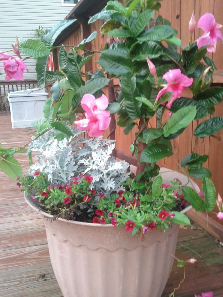 Growing Flowers: Thrill, Fill And Spill Container Gardening Ideas