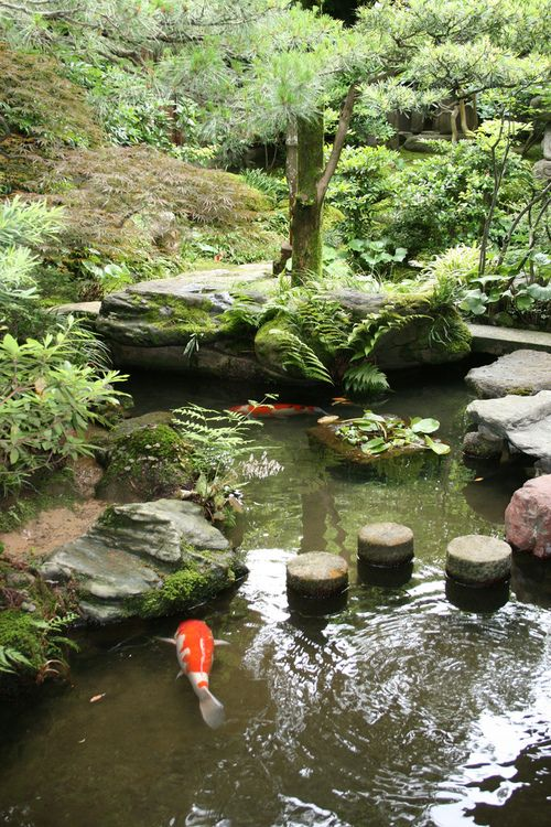 106 best images about koi ponds on pinterest the pond for Japanese garden pond design