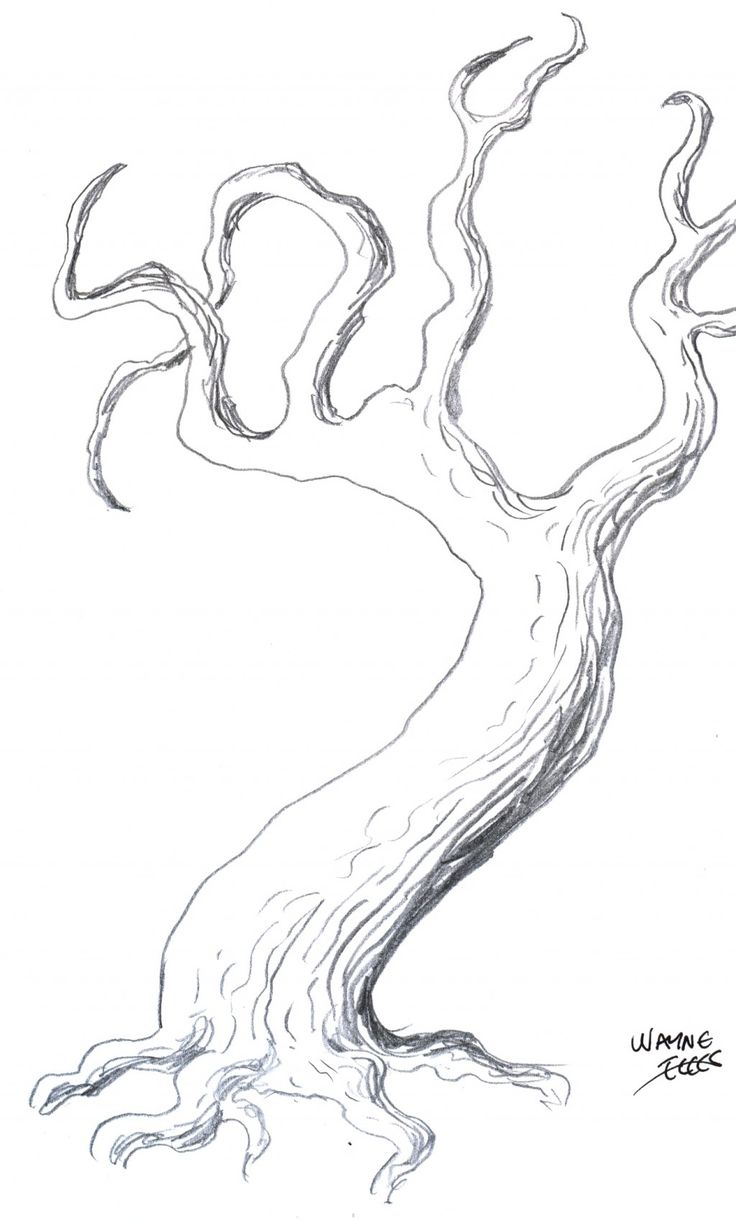 Drawing Trees: How To Draw A Tree Step By Step