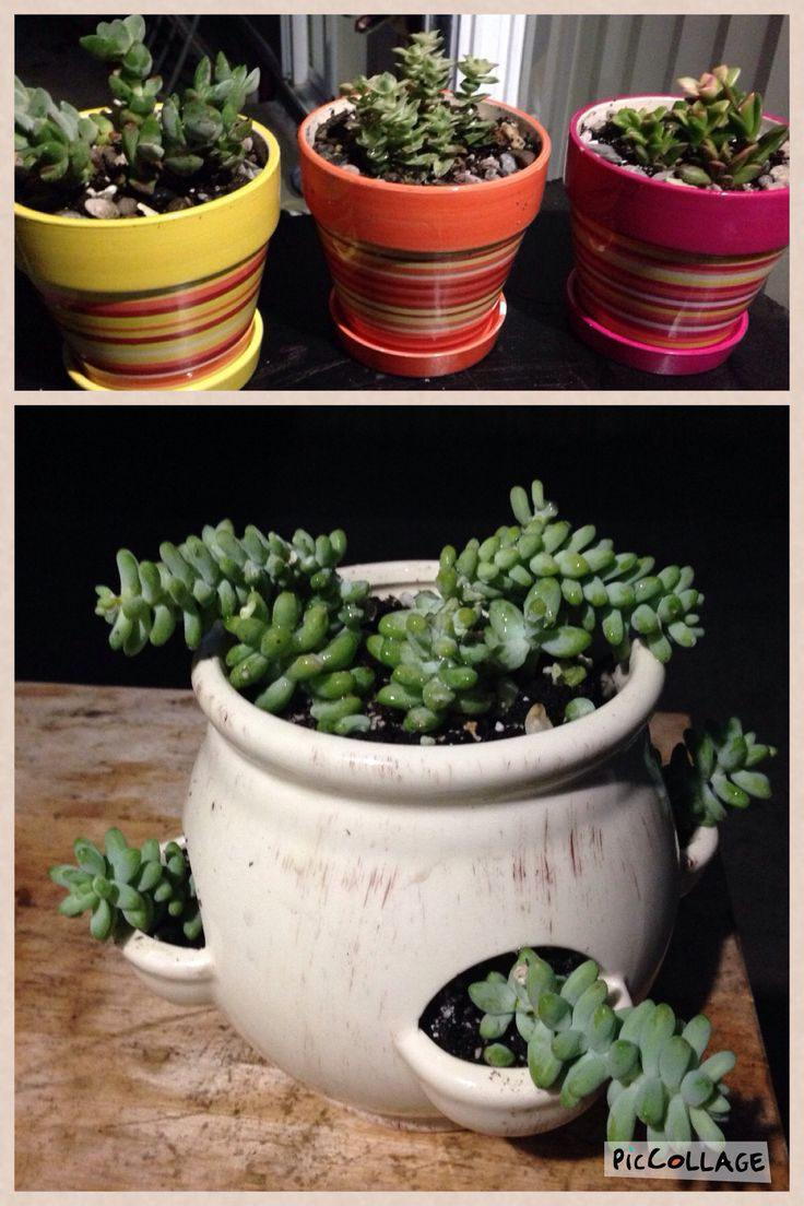 56 best pots and plants images on pinterest | diy, candies and friends