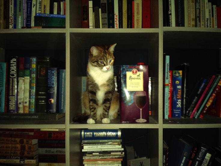 home library, cat and wine
