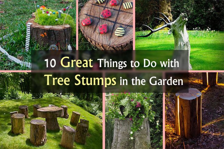 10 great things to do with tree stumps in the garden
