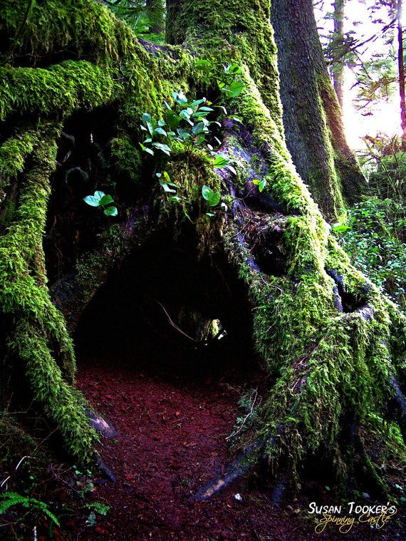 Enchanted Forest-I wish I had this in the wood here to escape to-reading under there would make the most mundane magical.