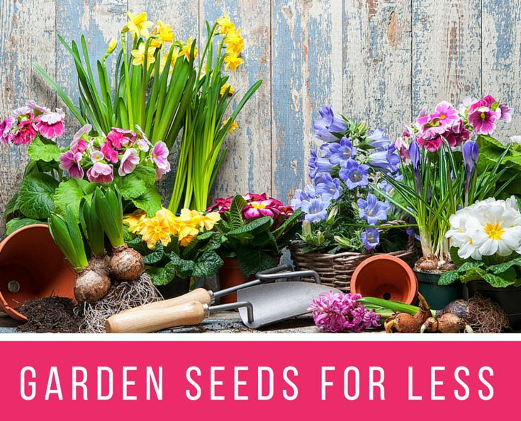 Best 25+ Garden Seeds Ideas On Pinterest | Saving Seeds, Pumpkin Garden And  Pepper Fruit Or Vegetable