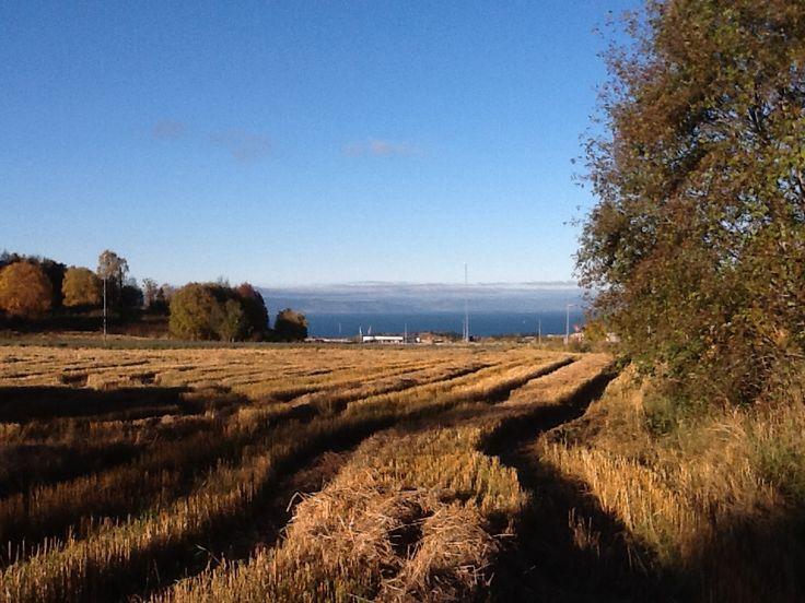 My last day in Norway... ha det bra!