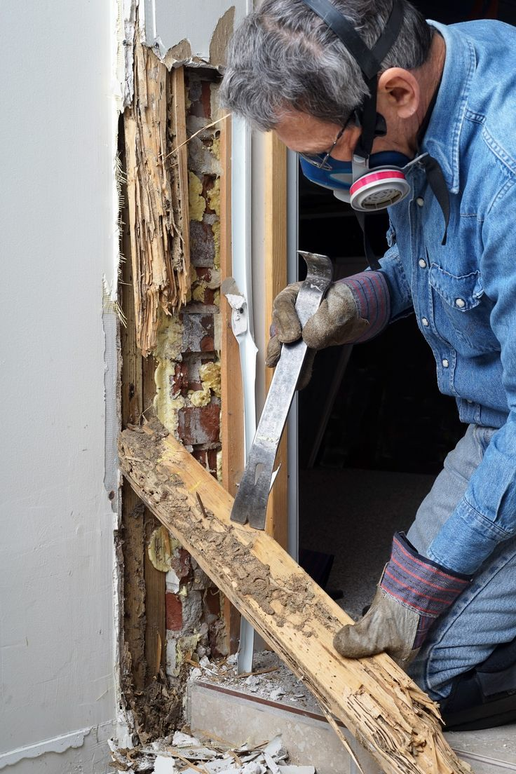 How do you get rid of winged termites in your house?