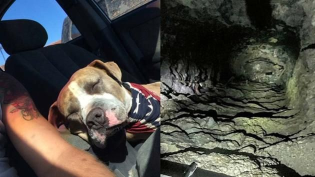 In Corona, California, a Pit Bull who fell down a mine shaft was rescued by a group of passing off-roaders. Michael Schoepf and his friends were off-roading near Coronoa when they discovered a mine shaft. They shined a light down the …