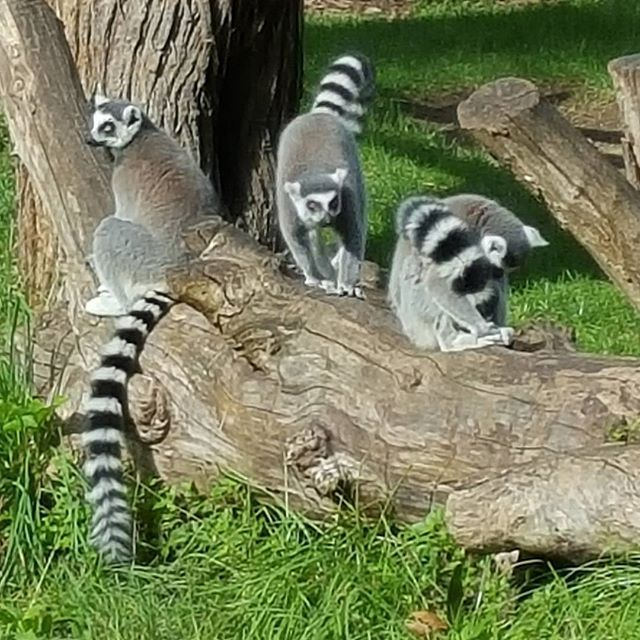 Discover the #nature! #Madagascar #VarietyCruises  Photo credits: @mp1995