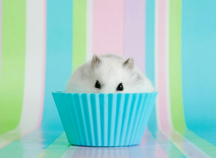 petite souris blanche