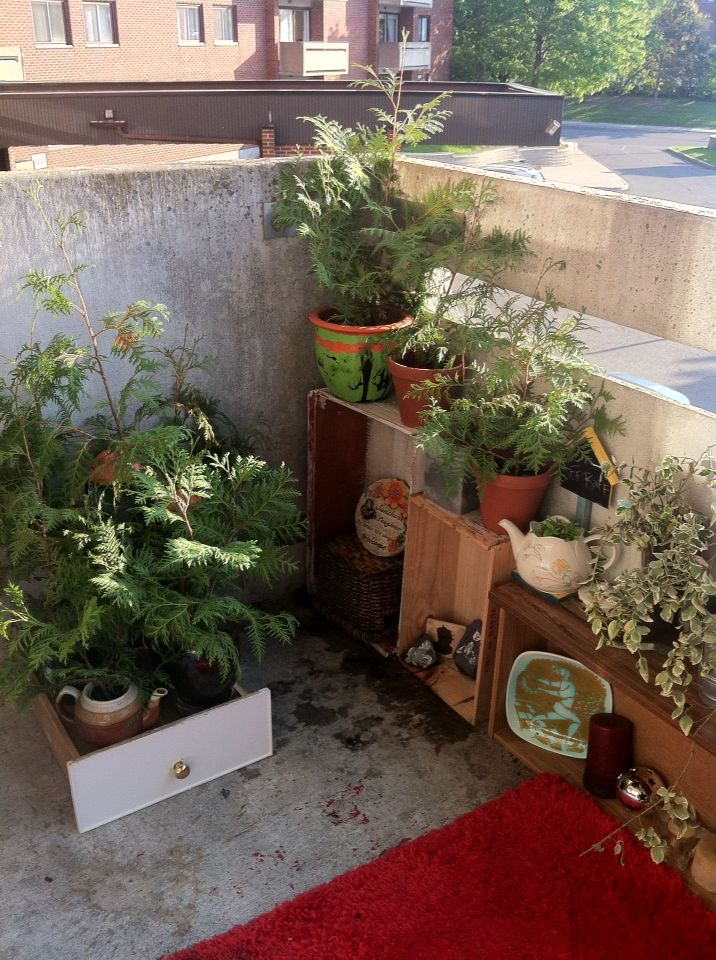 Plants on old drawers and reused teapots for planting... My cats adore this section of the balcony