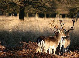 Richmond Park - Wikipedia, the free encyclopedia