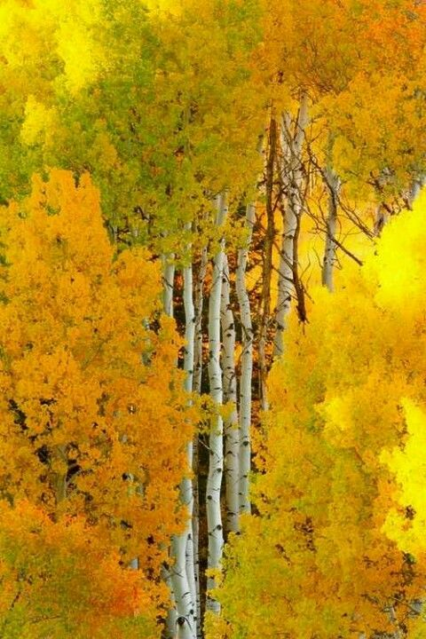 Nature is filled with all shades of yellow - the colour of happiness