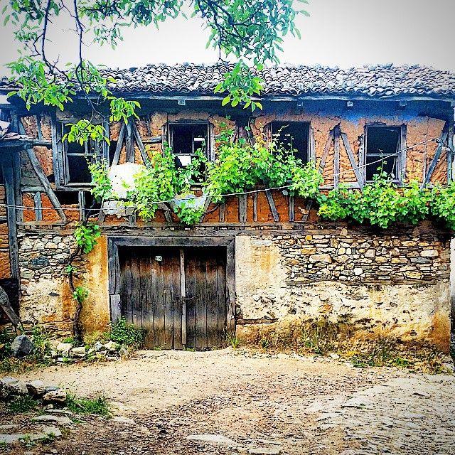#eski#ev#terkedilmiş#harabe#yıkık#dökük #virane#sarmaşık #eskiyeözlem #bursam #yanlız#gününkaresi #aniyakala #benimkadrajimdan #gününfotoğrafı #köyevi #asma #myphoto #hause#history #village #woodhause #love #like #colors #green #instagramturkey #instamood #verynice #