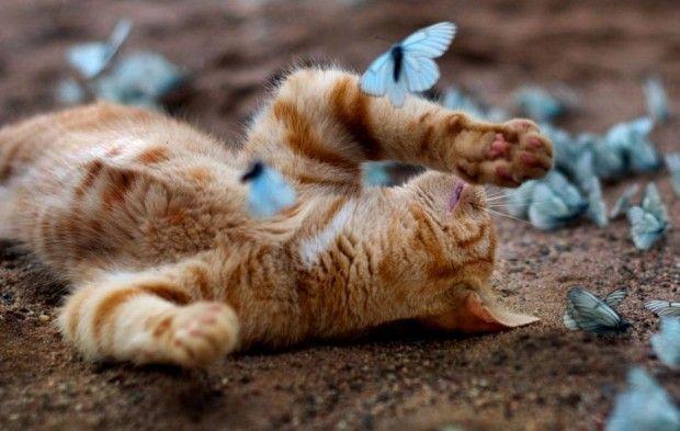 il gattino in un paradiso di farfalle blu