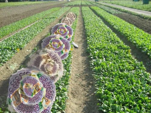 colture redditizie